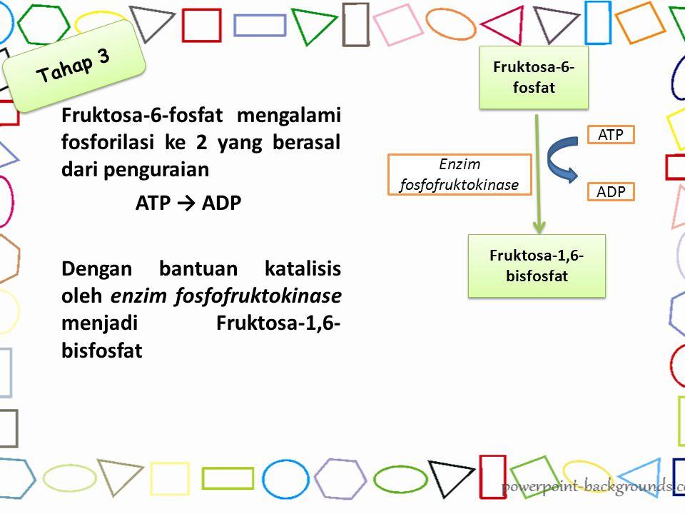 Enzim fosfofruktokinase