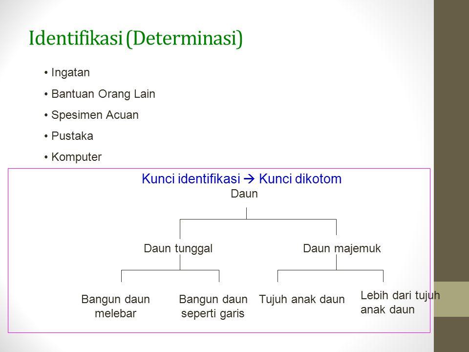 Identifikasi (Determinasi)