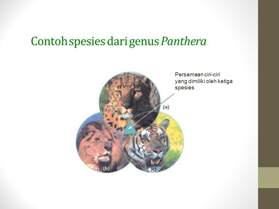 Contoh spesies dari genus Panthera