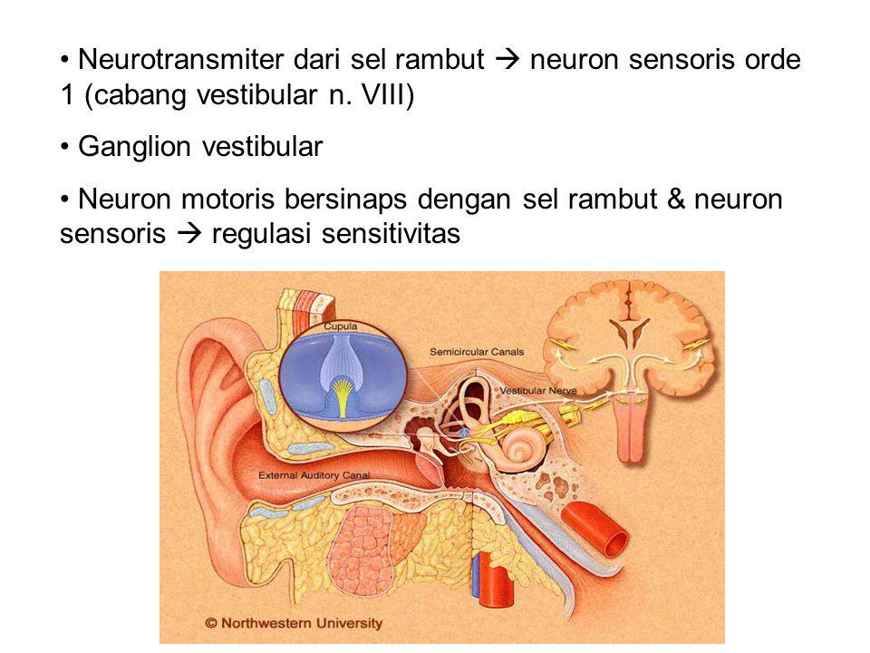 Neurotransmiter dari sel rambut  neuron sensoris orde 1 (cabang vestibular n. VIII)