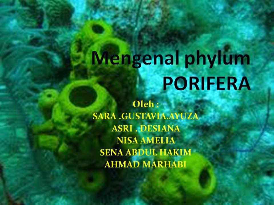 Mengenal phylum PORIFERA