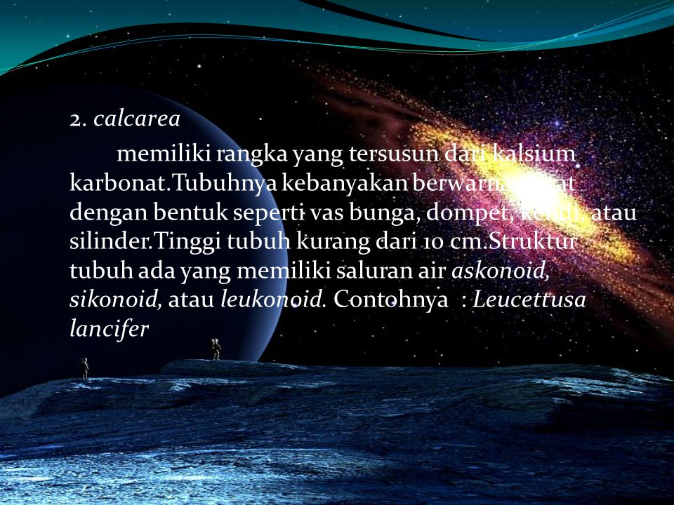2. calcarea memiliki rangka yang tersusun dari kalsium karbonat
