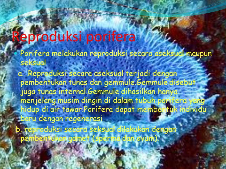 Reproduksi porifera Porifera melakukan reproduksi secara aseksual maupun seksual.