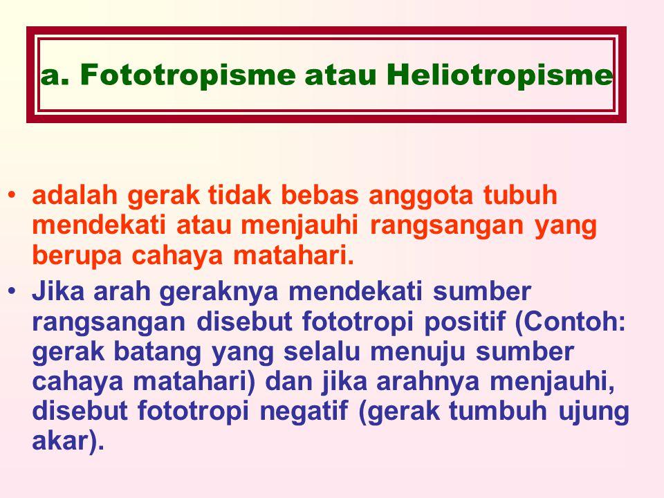 a. Fototropisme atau Heliotropisme