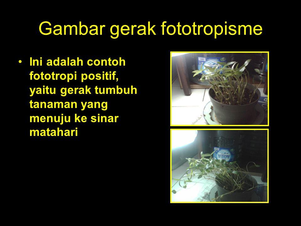 Gambar gerak fototropisme