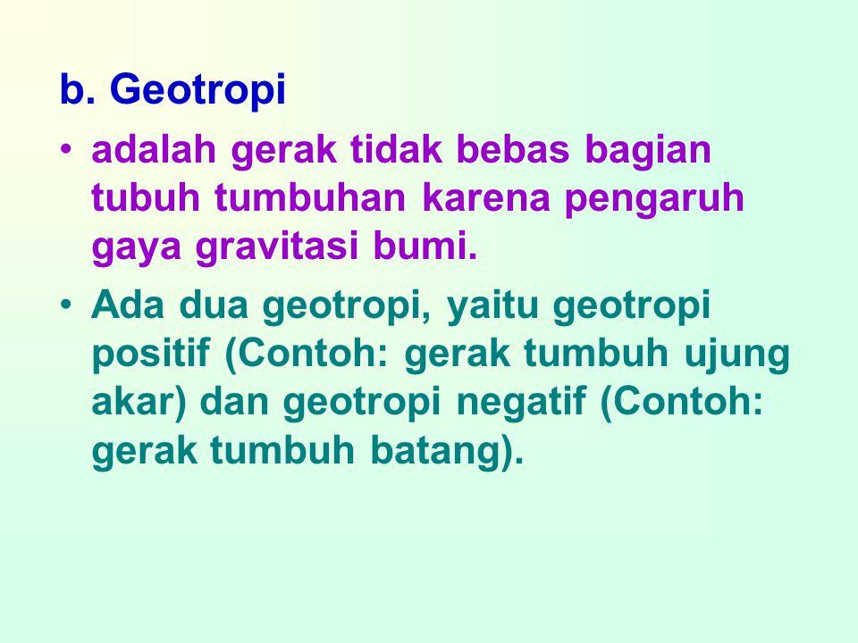 b. Geotropi adalah gerak tidak bebas bagian tubuh tumbuhan karena pengaruh gaya gravitasi bumi.