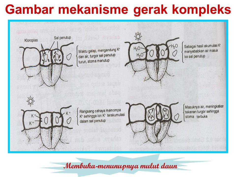 Gambar mekanisme gerak kompleks