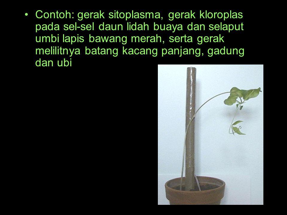 Contoh: gerak sitoplasma, gerak kloroplas pada sel-sel daun lidah buaya dan selaput umbi lapis bawang merah, serta gerak melilitnya batang kacang panjang, gadung dan ubi