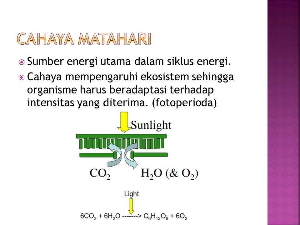 Cahaya Matahari Sumber energi utama dalam siklus energi.