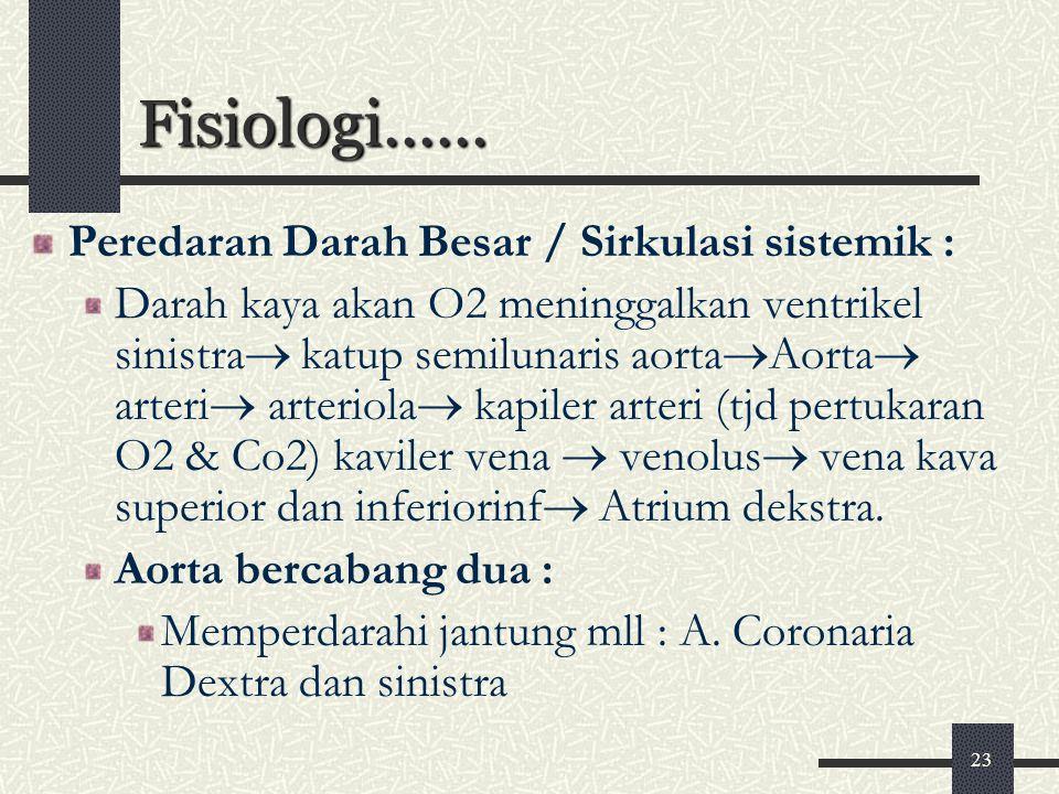Fisiologi...... Peredaran Darah Besar / Sirkulasi sistemik :