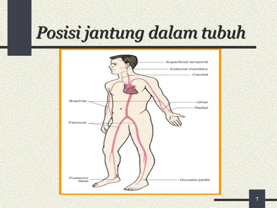 Posisi jantung dalam tubuh