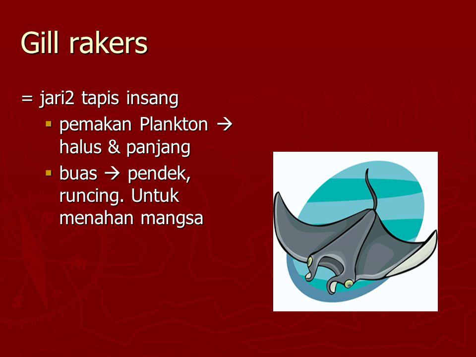 Gill rakers = jari2 tapis insang pemakan Plankton  halus & panjang