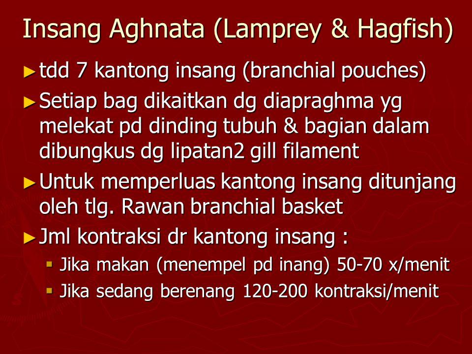 Insang Aghnata (Lamprey & Hagfish)