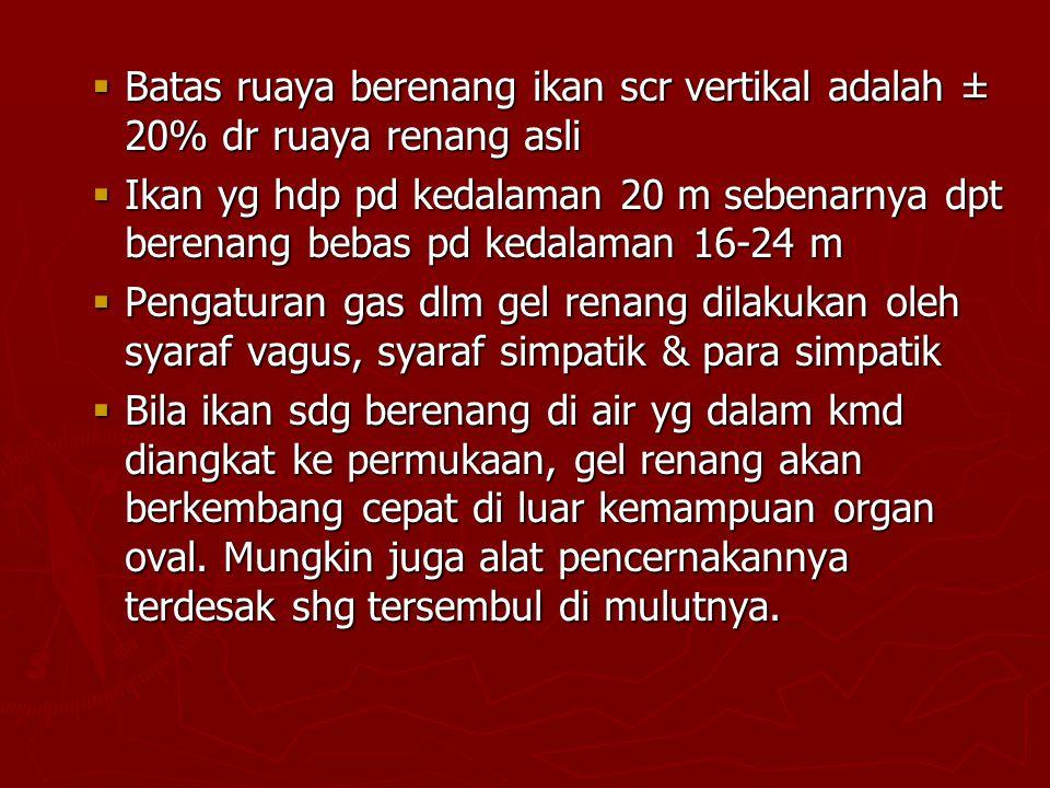 Batas ruaya berenang ikan scr vertikal adalah ± 20% dr ruaya renang asli