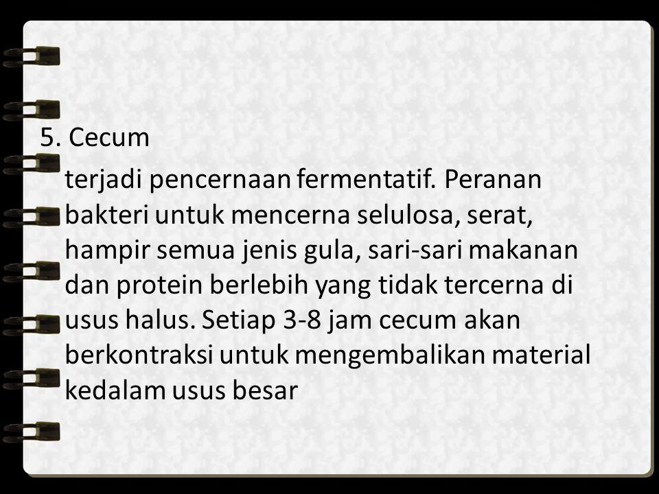 5. Cecum terjadi pencernaan fermentatif