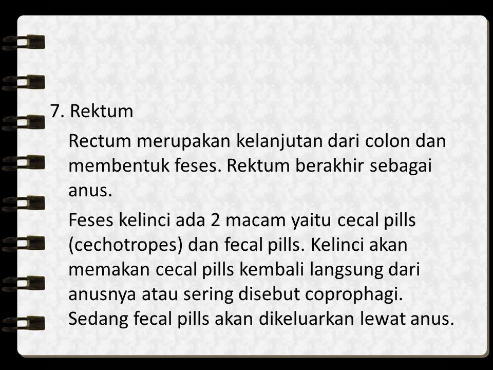 7. Rektum Rectum merupakan kelanjutan dari colon dan membentuk feses. Rektum berakhir sebagai anus.
