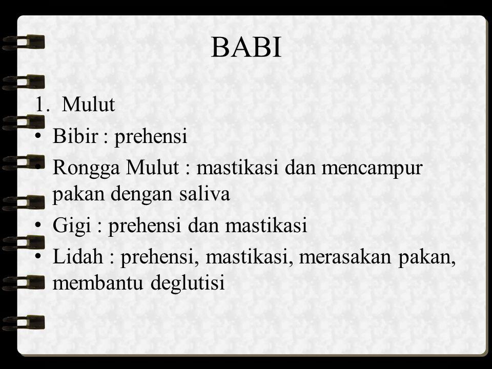 BABI Mulut Bibir : prehensi