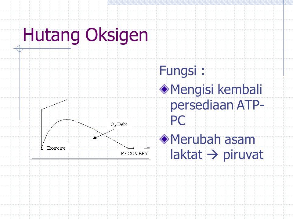 Hutang Oksigen Fungsi : Mengisi kembali persediaan ATP-PC