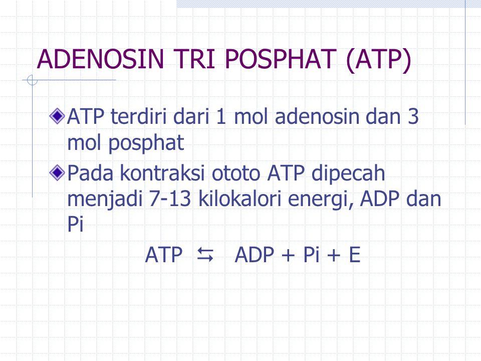 ADENOSIN TRI POSPHAT (ATP)