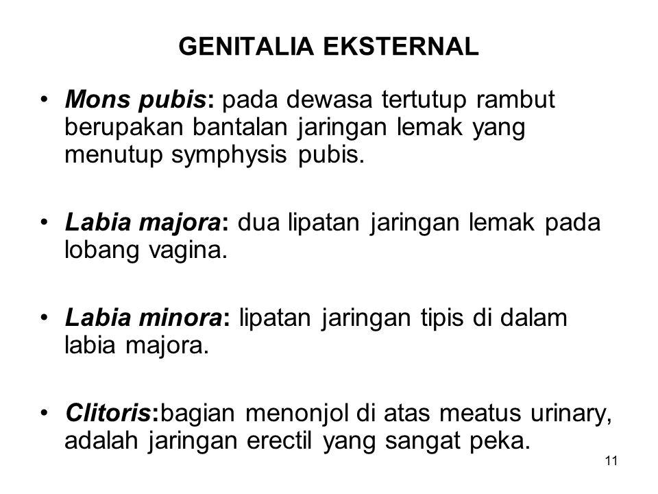 GENITALIA EKSTERNAL Mons pubis: pada dewasa tertutup rambut berupakan bantalan jaringan lemak yang menutup symphysis pubis.