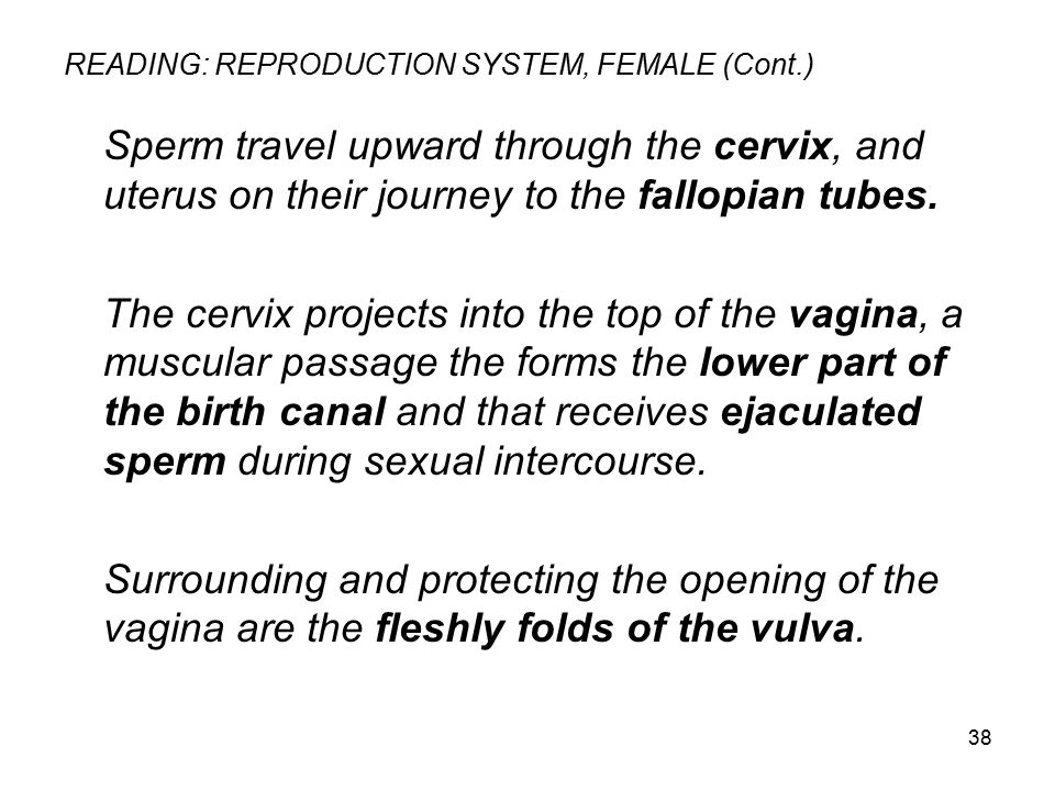 READING: REPRODUCTION SYSTEM, FEMALE (Cont.)