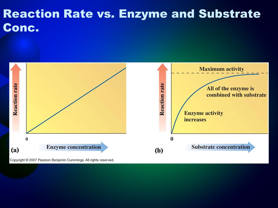 Reaction Rate vs. Enzyme and Substrate Conc.