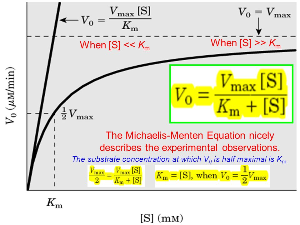 The Michaelis-Menten Equation nicely