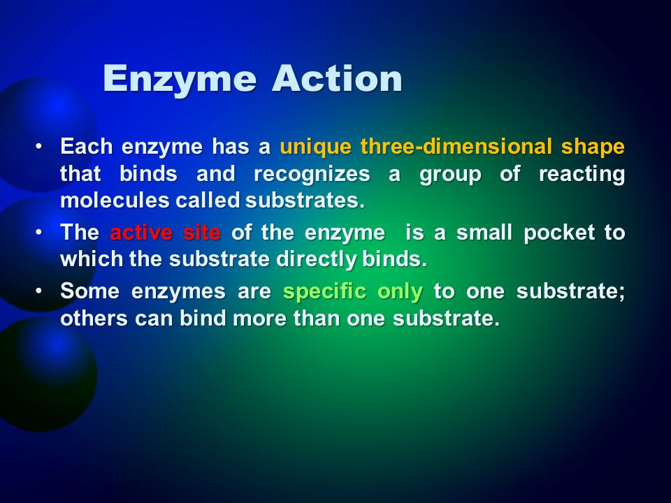 Enzyme Action Each enzyme has a unique three-dimensional shape that binds and recognizes a group of reacting molecules called substrates.