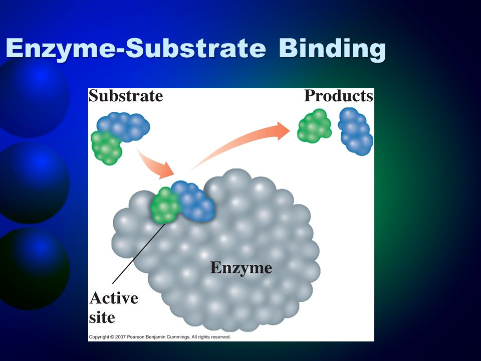 Enzyme-Substrate Binding