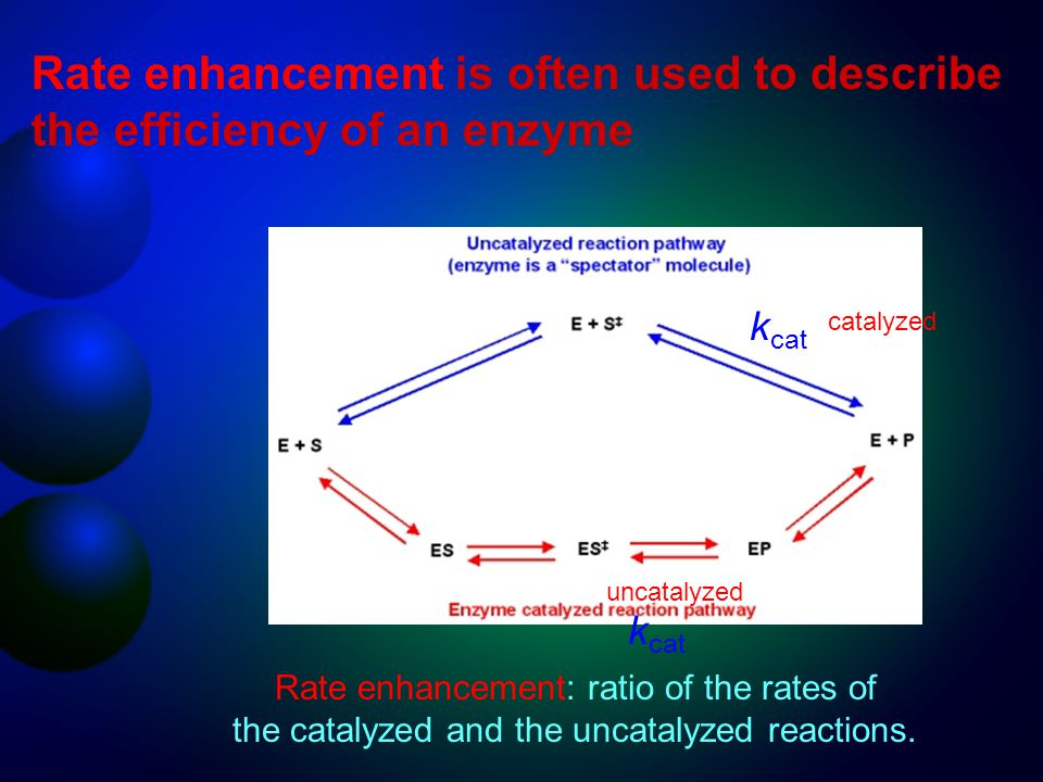 Rate enhancement is often used to describe the efficiency of an enzyme