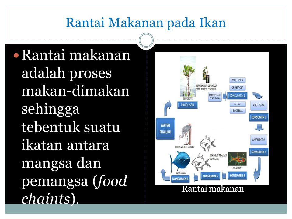 Rantai Makanan pada Ikan