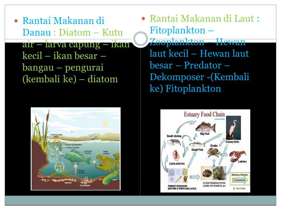 Rantai Makanan di Laut : Fitoplankton – Zooplankton – Hewan laut kecil – Hewan laut besar – Predator – Dekomposer -(Kembali ke) Fitoplankton