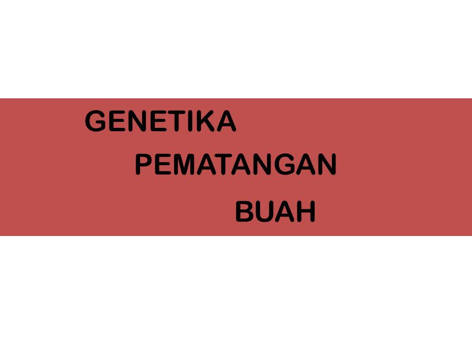 GENETIKA PEMATANGAN BUAH