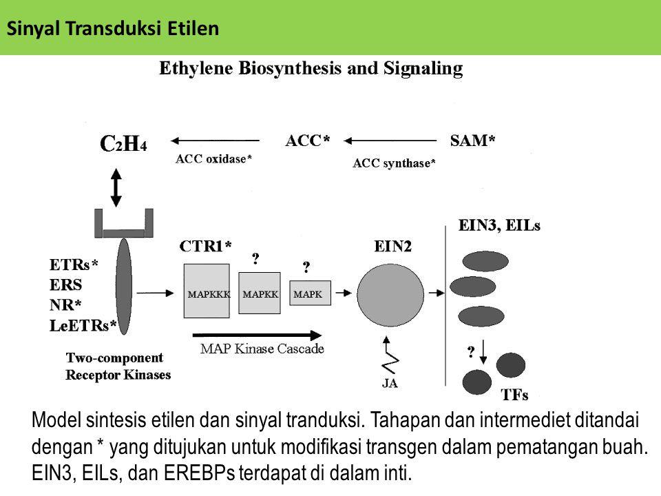 Sinyal Transduksi Etilen