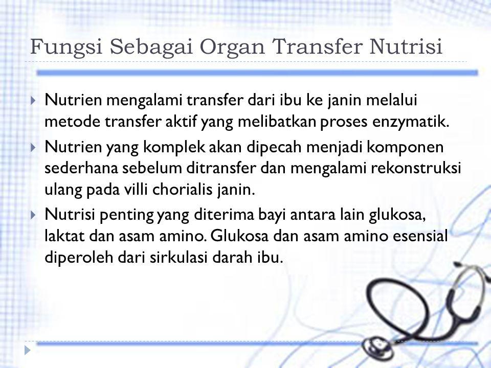 Fungsi Sebagai Organ Transfer Nutrisi