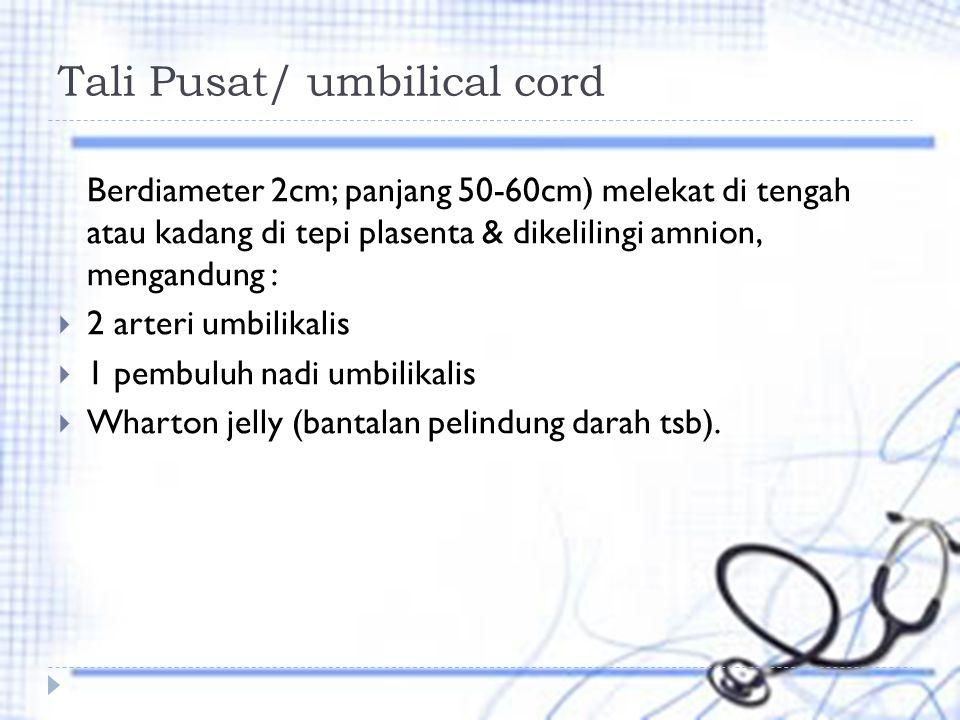 Tali Pusat/ umbilical cord