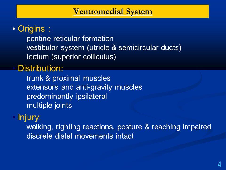 Ventromedial System Origins : pontine reticular formation vestibular system (utricle & semicircular ducts) tectum (superior colliculus)