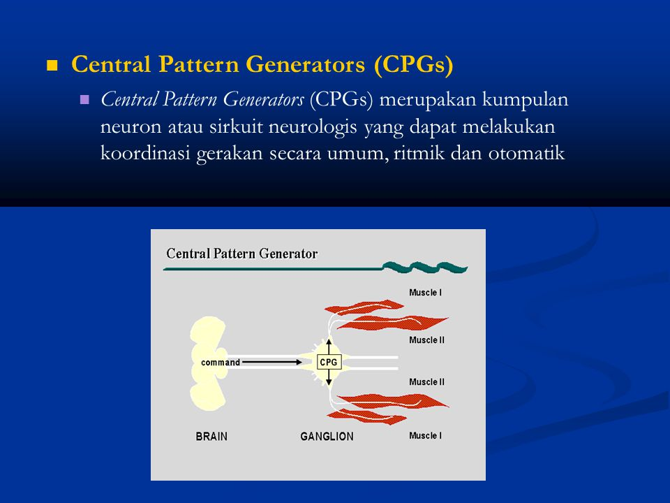 Central Pattern Generators (CPGs)