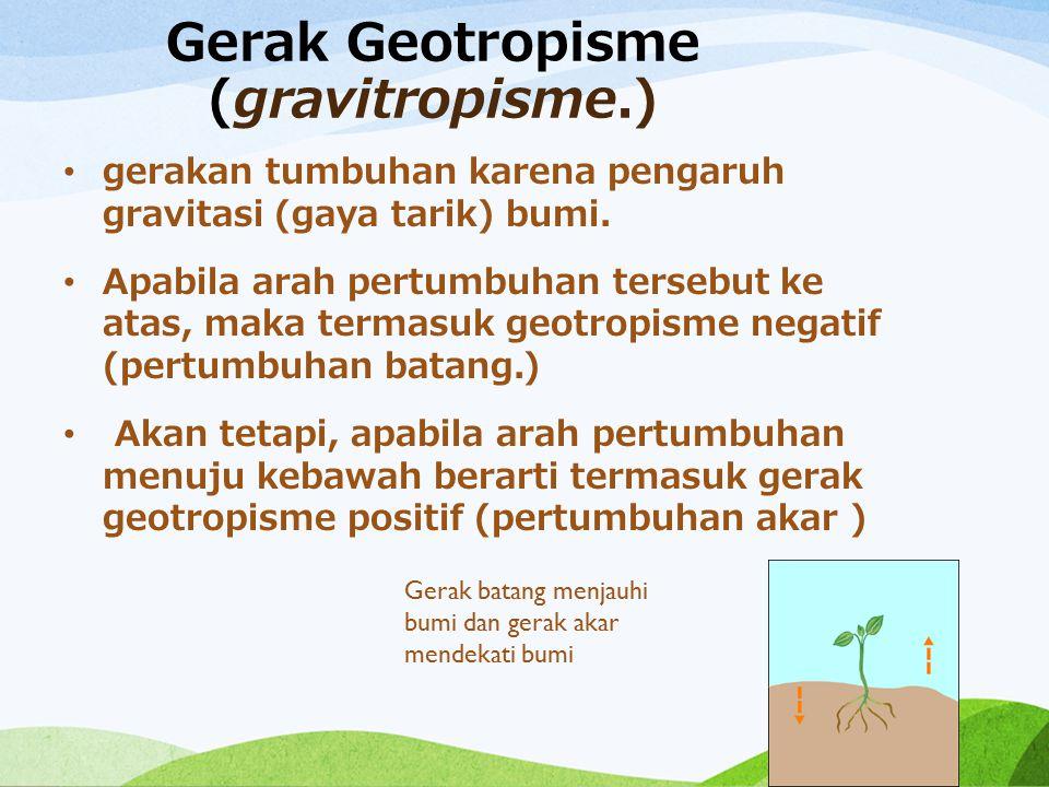 Gerak Geotropisme (gravitropisme.)