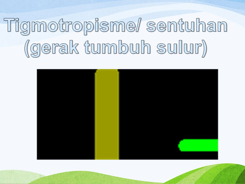Tigmotropisme/ sentuhan