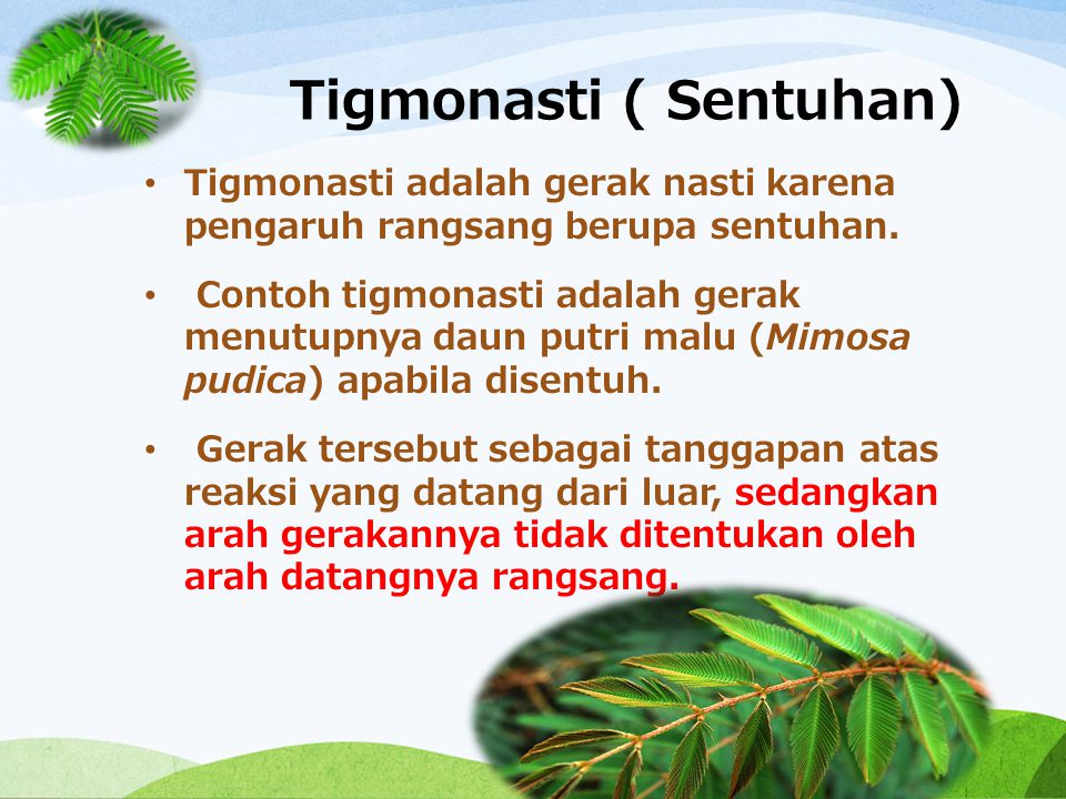 Tigmonasti ( Sentuhan)