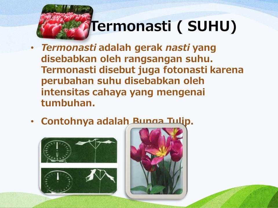 Termonasti ( SUHU)