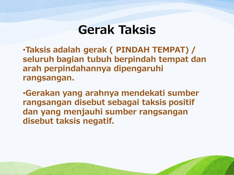 Gerak Taksis Taksis adalah gerak ( PINDAH TEMPAT) / seluruh bagian tubuh berpindah tempat dan arah perpindahannya dipengaruhi rangsangan.