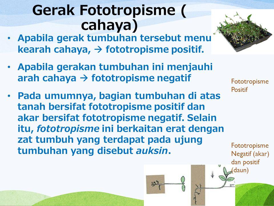 Gerak Fototropisme ( cahaya)