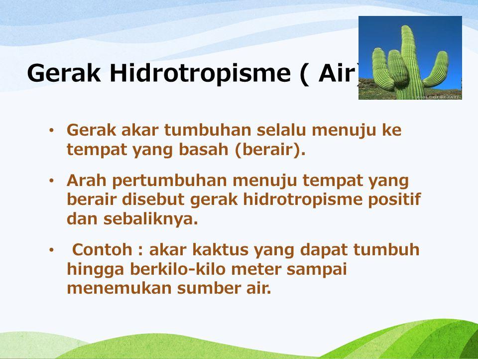 Gerak Hidrotropisme ( Air)