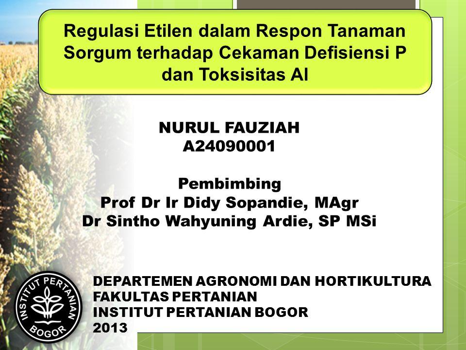 Prof Dr Ir Didy Sopandie, MAgr Dr Sintho Wahyuning Ardie, SP MSi