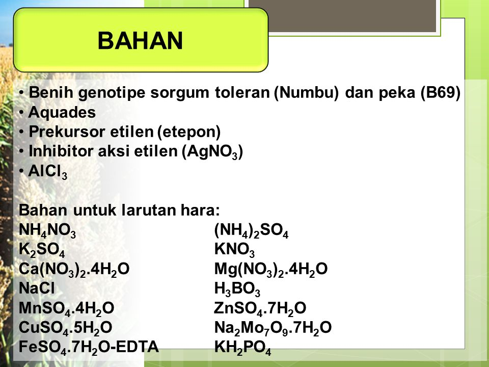 BAHAN Benih genotipe sorgum toleran (Numbu) dan peka (B69) Aquades