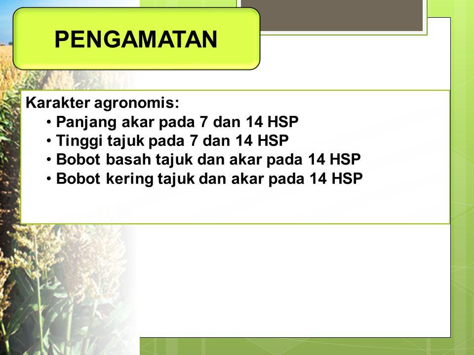 PENGAMATAN Karakter agronomis: Panjang akar pada 7 dan 14 HSP