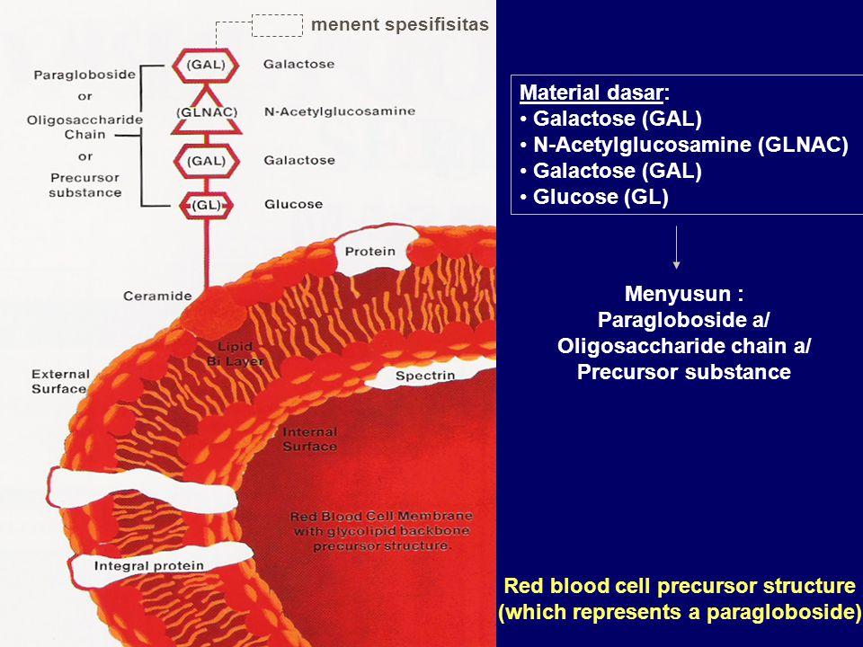 N-Acetylglucosamine (GLNAC) Glucose (GL)