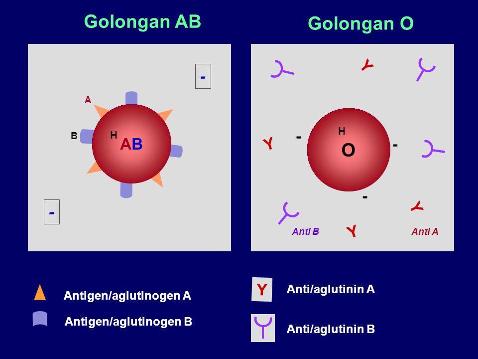 Golongan AB Golongan O O Y - AB - Y - - Y - Y Y Anti/aglutinin A